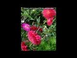 «цветы» под музыку А. Панайотов, А. Чумаков, Р. Алехно - Необыкновенная,ласковая, нежная!!!. Picrolla