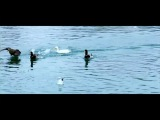Aql va yurak (ozbek film) | Акл ва юрак 2014
