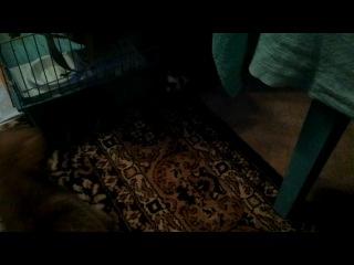 Хореша играет со щенком