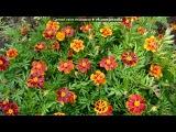 «Мои любимые цветы.» под музыку Вероника Агапова - Самая красивая песня о любви,цветах и осени. Picrolla