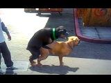 Чоп Трахает уличную собаку