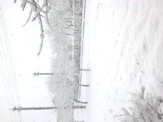 16.03.2014 Трилесино, Дрибинский р-н, Могилёвская область))