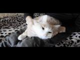 Румян - Мой кот любит хип-хоп