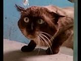 очень ржачный кот
