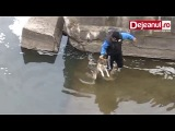 Собака благодарна людям за свое спасение