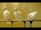 прикол, ржачь, смешно, я чуть не умер от смеха,  бедные попугаи, хахаха, страшно смешно
