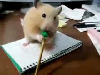 Хомяк и карандаш