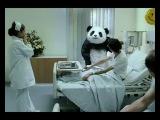 Панда не хуйня