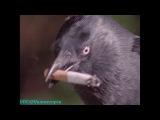 BBC «Незримые силы животных (5) - Паранормальные явления» (Документальный, 1999)