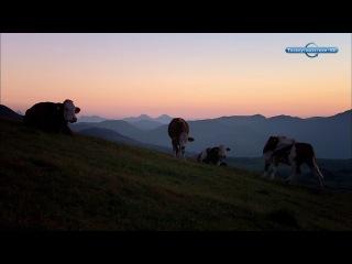 Телепутешествия HD - про оленей часть 1
