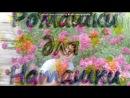 имена на небесах под музыку 085 Aleksandr Rozenbaum i Zhasmin Imena na nebesah Picrolla