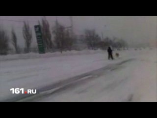 Ростовчане начали передвигаться по городу на собачьих упряжках - Новости онлайн - Новости