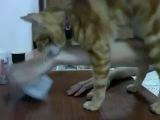 Кот просит хозяина открыть коробку