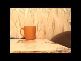 Самые_смешные_приколы_с_животными_2013__ЖМИ_и_смотри__medium