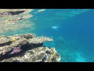 Плаваем с Женей (Pinavija) Коралловый риф в окрестностях отеля Baron 2014