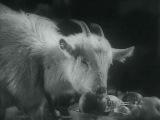 Из фильма Весёлые ребята - Весёлый ужин зверей