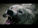 Классный эпизод из фильма-Азбука смерти- Собачьи бои (2012) WEB-DLRip