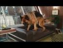 Кошки против Собак 2:Месть Кити Галор - Это подарок бабушки
