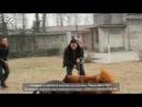 Собачьи бои тибетский мастиф vs канарский дог