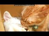 «Котятки=^_^=» под музыку Kansas - Carry On My Wayward Son. Picrolla