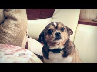 Собаку ругают, а он все понимает.