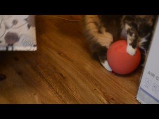 Кошка и шарик 1
