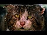 «В НАДЕЖДЕ ДОСТУЧАТЬСЯ ДО СЕРДЕЦ» под музыку Кристина Прилепина - Котёнок в колодце. Picrolla