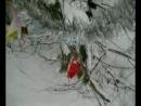 Зимняя прогулка на лыжах!