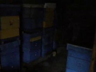Заноска пчёл в зимовку 2012-2013г.г.