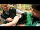 EcoStyle, 18.02.2013 (финальное видео визитки)