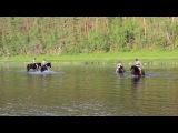 Купание лошадей. Тур