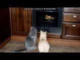 «Со стены приколы про кошек котов и котят» под музыку Кристина Прилепина - Котёнок в колодце  бедняжка. Picrolla