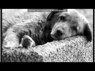«бездомные животные» под музыку Классика - Очень грустная песня о мирском и вечном. Picrolla