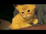 Котёнок Пикачу ахахха наркоманский няшный брееед)