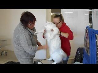 Выставка кошей. Понравился белый кошак