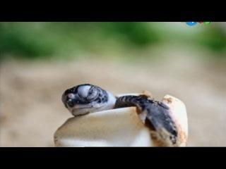 2  сезон  26. Подводная лодка динозавров. Рассказ о морской черепахе. Скоростной поезд / Dinosaur Train Submarine: A Sea Turtle Tale. Rock