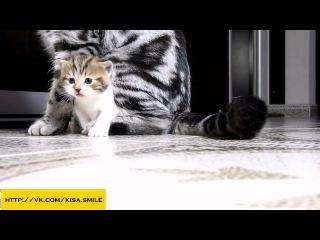 неуклюжие котята