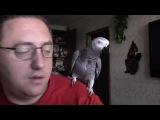 Говорящий попугай Григорий