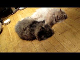 Упоротые коты-геи ХД