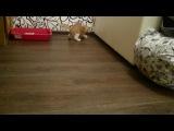 Умничка:) Иногда котята