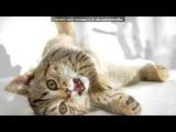«милашки♥♥♥» под музыку Вокалоиды (Лен и Рин)  - Ах, эта прекрасная кошачья жизнь!. Picrolla