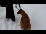 Хозяин хотел повесить свою собаку потому что она стала ему не нужна!