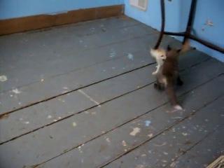 Малыши фенека и рыжей лисы играют вместе