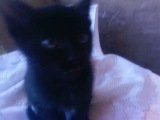 Отдам котят в хорошие руки ,Астрахань-89297431240. Они домашние няшные. Пишите http://vk.com/shama97 . За репост отдельное спаси