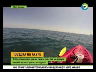Рыба-молот протащила рыбака на лодке 20 км.