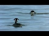 Le Peuple migrateur (Птицы)