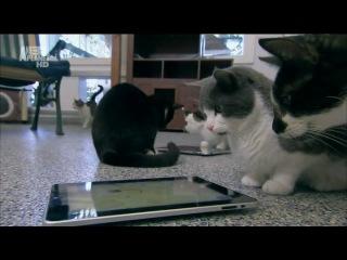 Кошек не любить нельзя. 2 сезон. 2 серия.