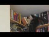 ржачные коты, подборка видео о смешных котах, коты вытворяют, самое смешное видео от PromoZP