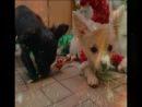 Бакси и его сестренка Черри всех поздравляют с наступающим новым годом, который уже очень скора! и дарят всем эту песенку для новогоднего настроения!