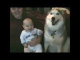 Малыши и собаки (они такие смешные)